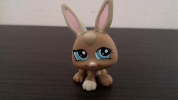 lps zajačik